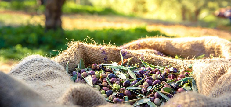 HOW TO GET MORE HEALTHY AND SUSTAINABLE OLIVE OIL
