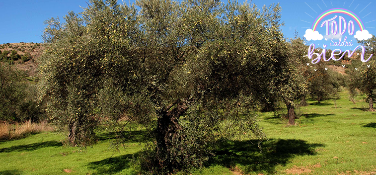 La UE prevé un stock final de campaña de 603.113 t. de aceite de oliva