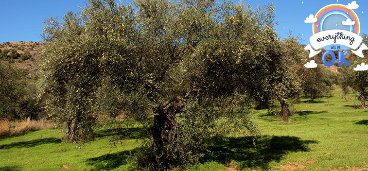 The EU anticipates a final campaign stock of 603,113 t. olive oil