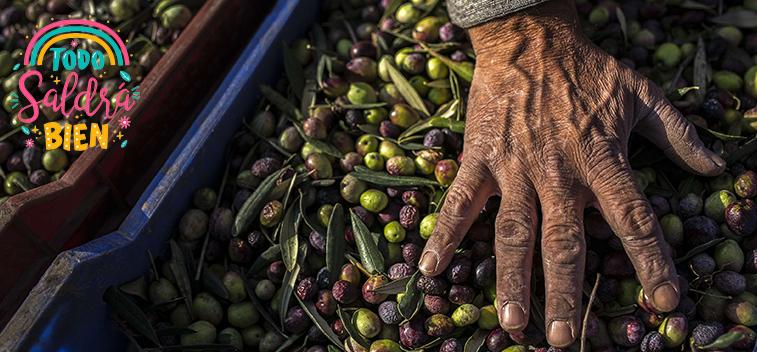 La CE prevé un aumento del 20% en la producción de aceite de oliva para la campaña 20/21