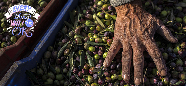 The EC foresees a 20% increase in olive oil production for the 20/21 campaign