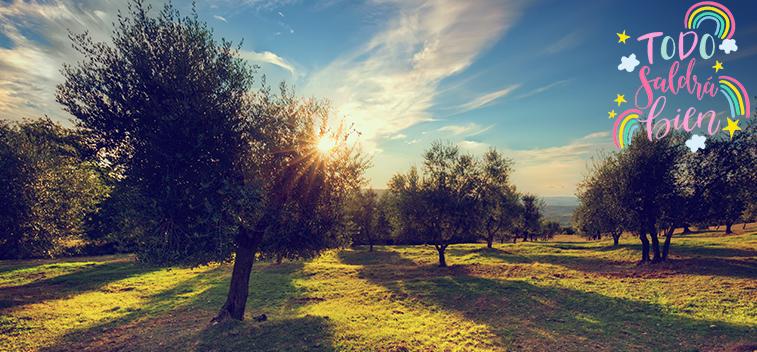 La CE prevé que la producción de aceite de oliva de la UE suba un 17% en la próxima campaña