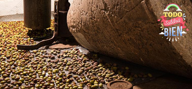 El avance del uso del hueso de aceituna y otros subproductos del olivo como biomasa – Parte II