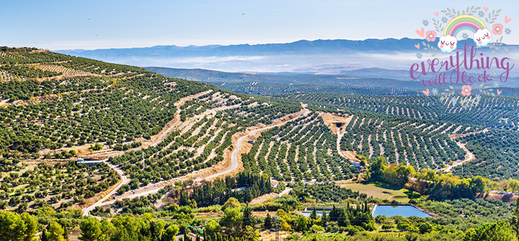 The Andalusian olive grove landscape aspires to be a World Heritage Site in 2023