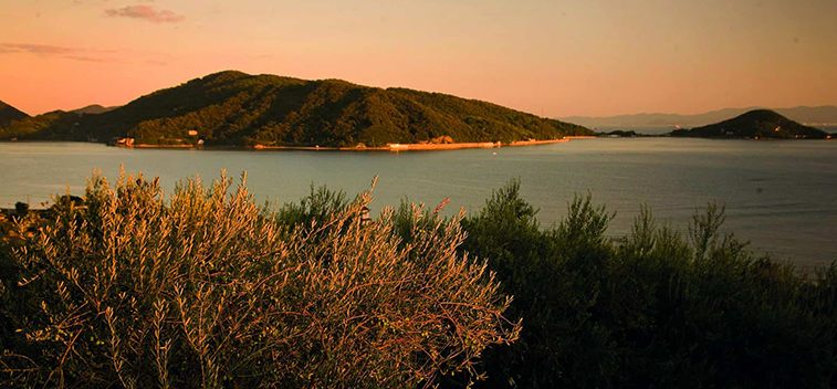 The olive tree around the world, a wonderful trip for this summer - Part I