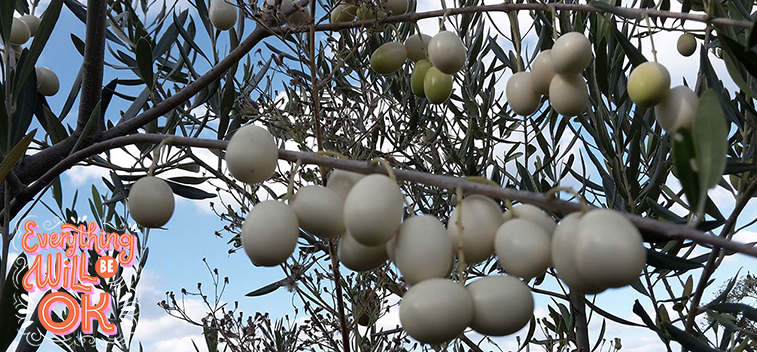 A study reveals the nutritional properties of wild olive oil