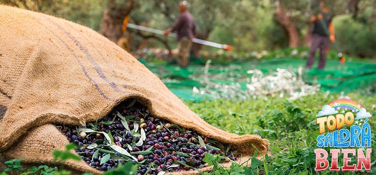 El avance del uso del hueso de aceituna y otros subproductos del olivo como biomasa – Parte I