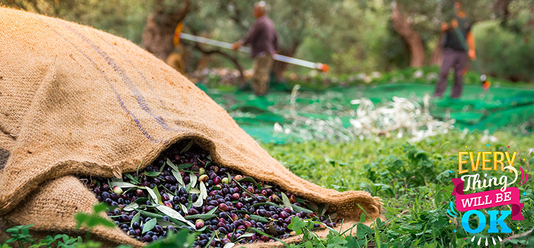 The advance of the use of olive pit and other by-products of the olive tree as biomass – Part I