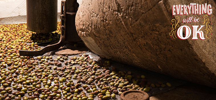 The advance of the use of olive pit and other by-products of the olive tree as biomass – Part II