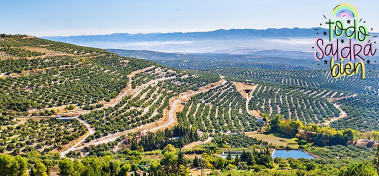 El paisaje del olivar andaluz aspira a ser Patrimonio de la Humanidad en 2023